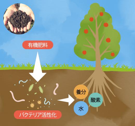 有機肥料→バクテリア活性化→養分・水・酸素