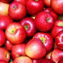 青木農園のりんご